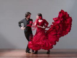 Flamenco-flamenco-29464383-1024-768